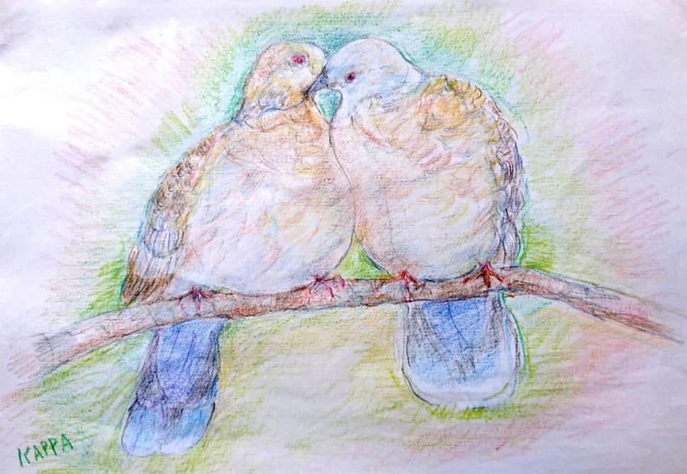 羽繕いをする二羽のキジバト