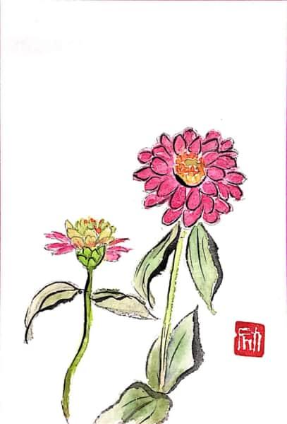 ジニア(百日草)の花