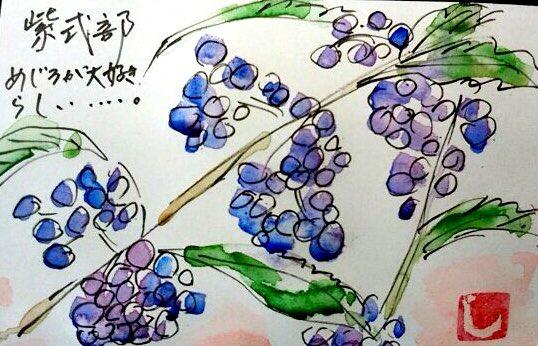 紫式部の実 メジロが大好きらしい…。