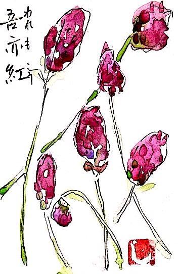 吾亦紅の花