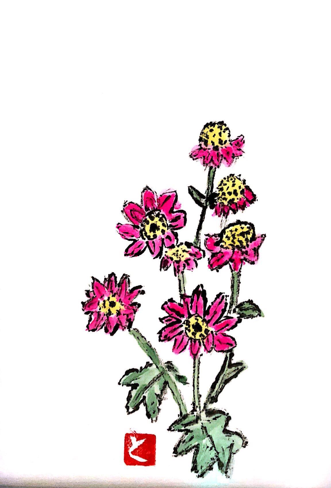 ピンクの百日草ダリア