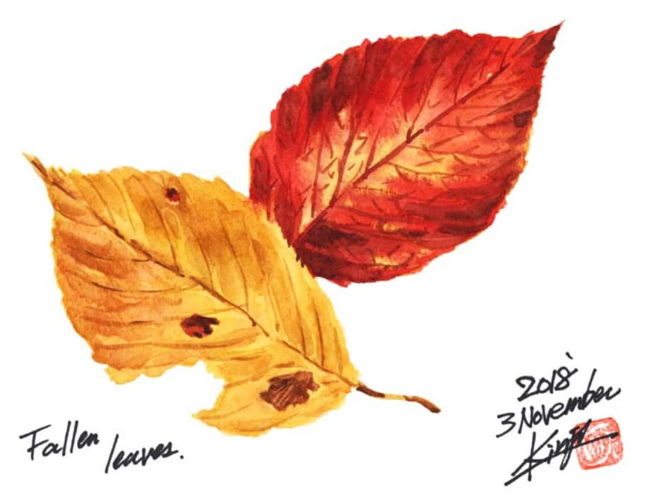 黄と赤、二枚の落葉