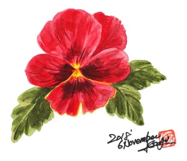 真っ赤なビオラの花