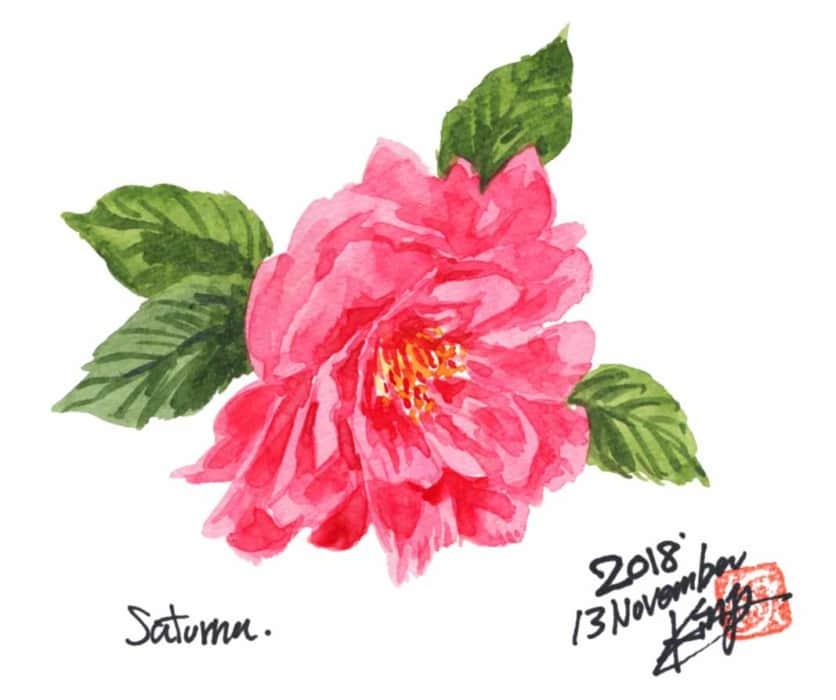 ピンクの山茶花の花
