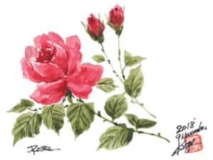 雨の日にピンクのバラ