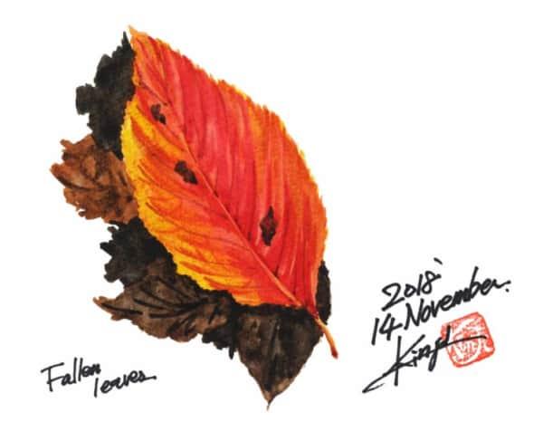 深まる秋に、赤い落葉