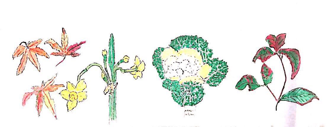 紅葉、黄水仙、葉牡丹、冬の植物たち