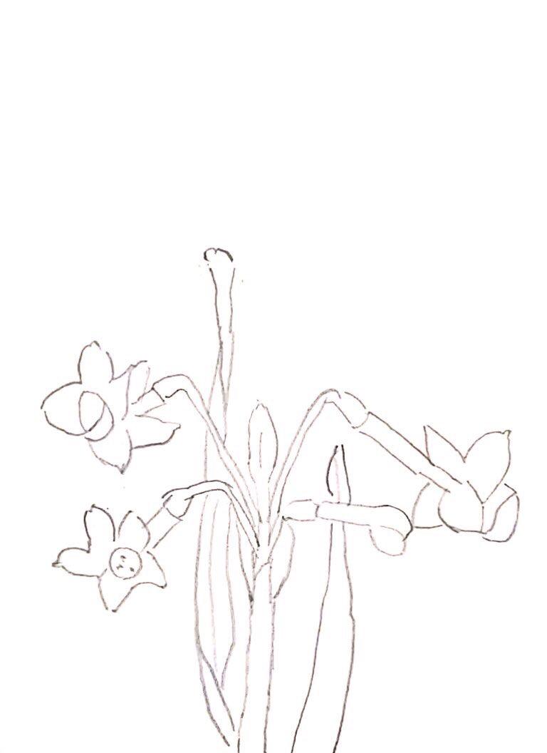 水仙の花のデッサン