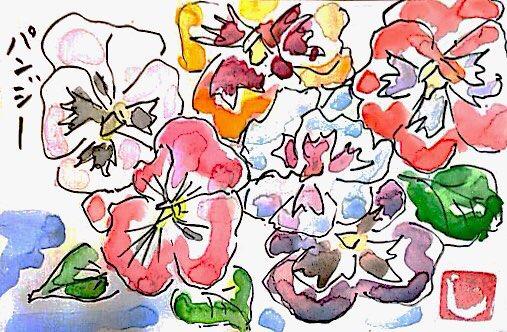 カラフルなパンジーの花