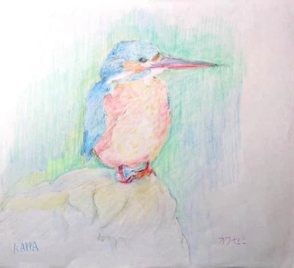 憧れの野鳥 カワセミ