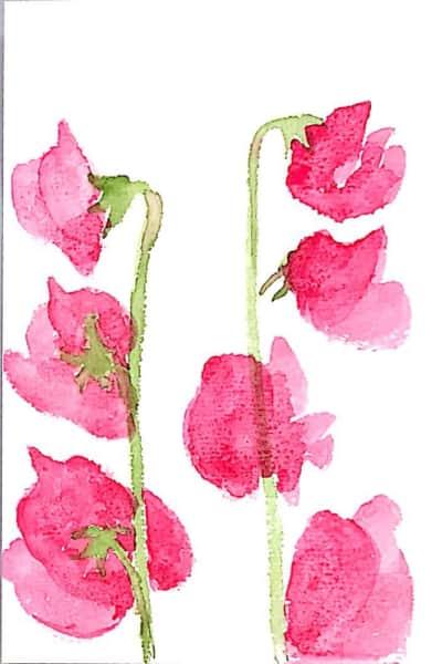 赤いスイートピーの花のデッサン