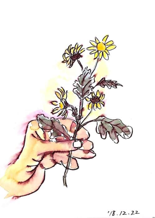 白いマーガレットの花を持つ手のデッサン