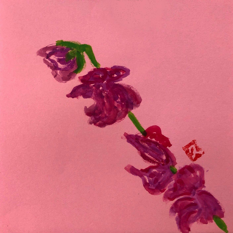 赤いスイートピーの花