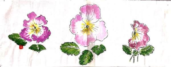 ピンクのプリムラジュリアンの花