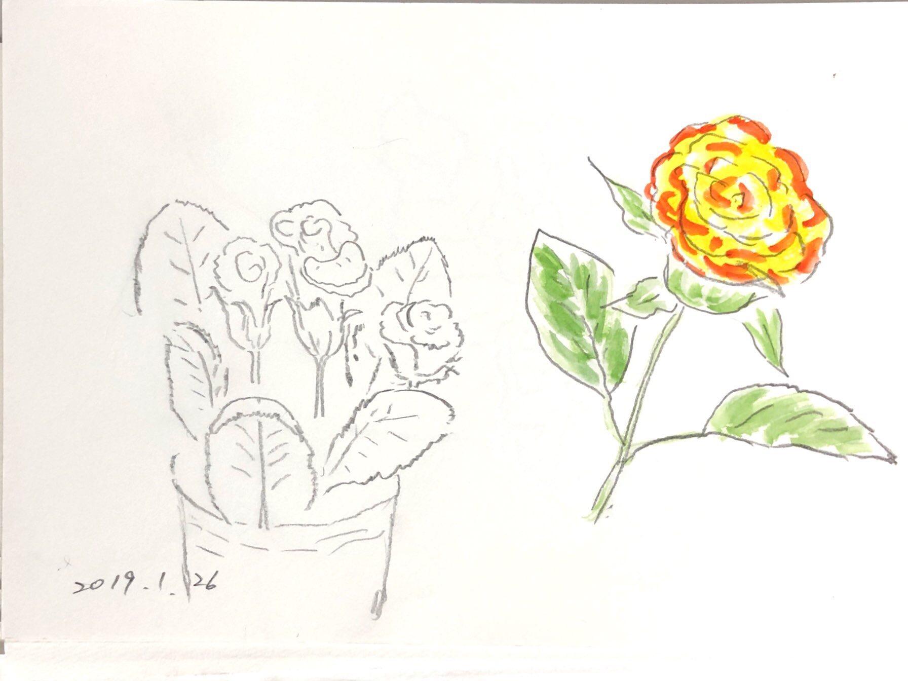 黄バラの花のデッサン