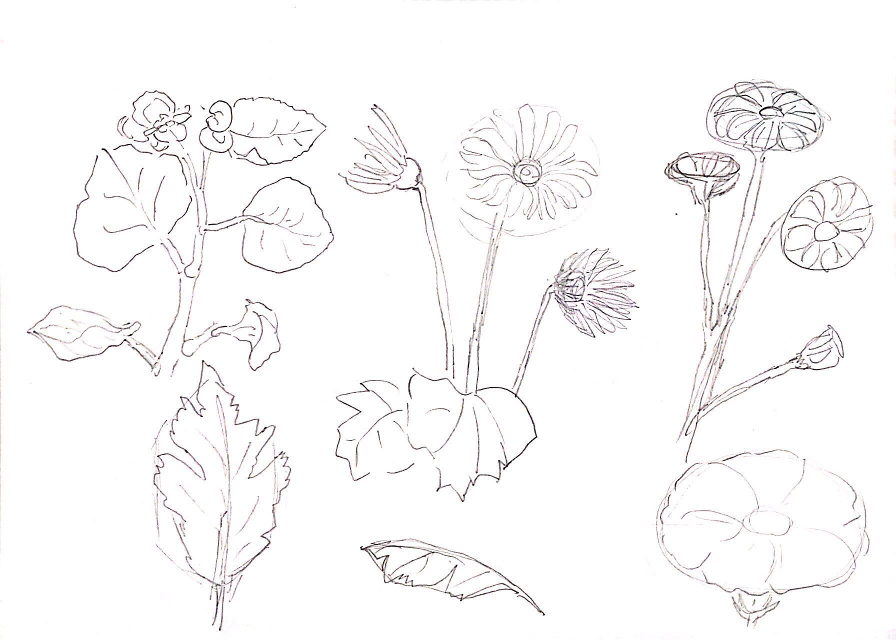 花々のデッサン