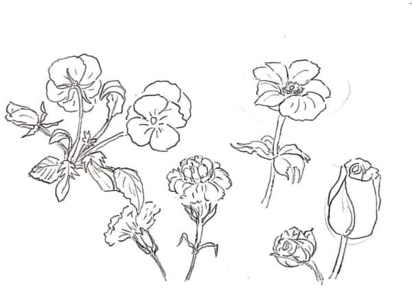 バラやパンジーの花のデッサン