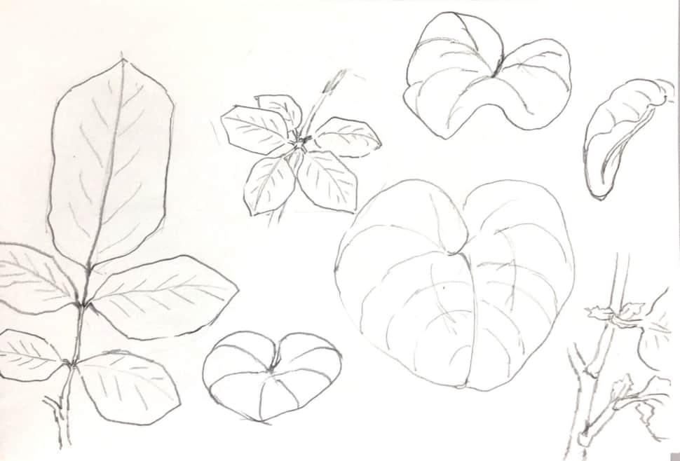 蓮の葉などのデッサン