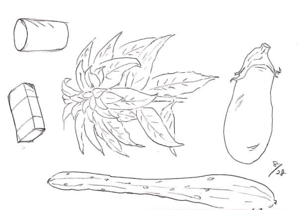 茄子やきゅうり、夏のデッサン