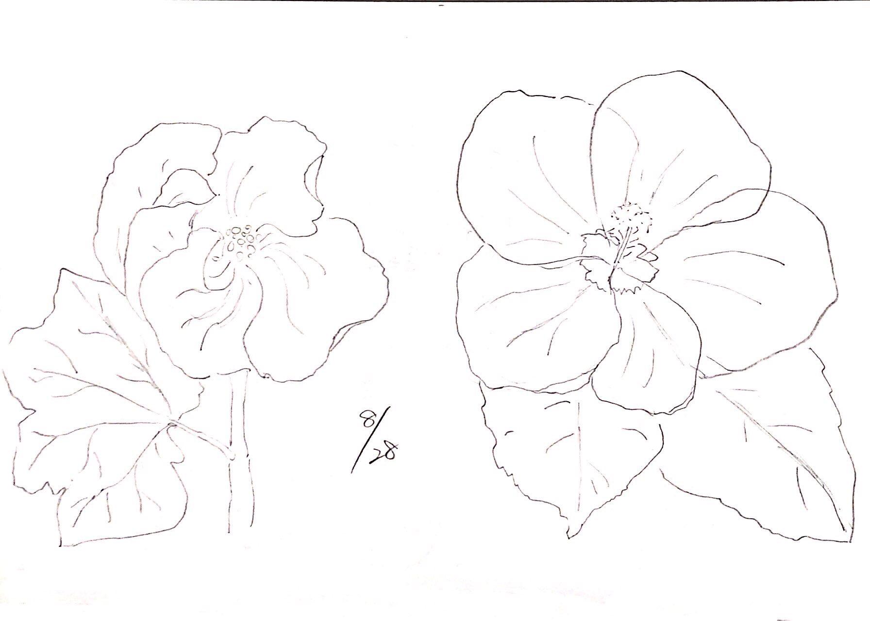 タチアオイと日々草の花の八月デッサン