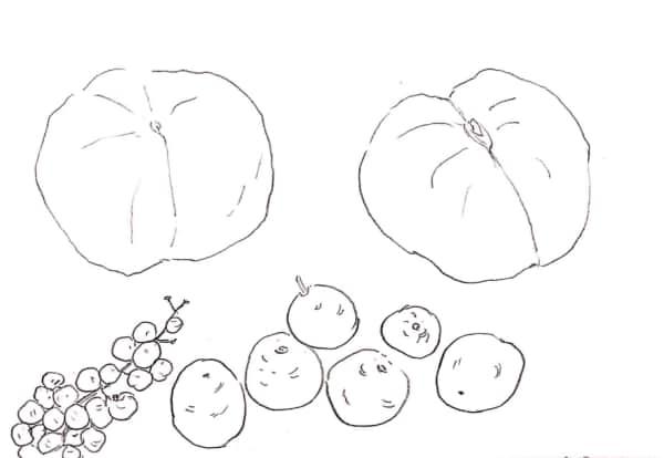 木の実のデッサン