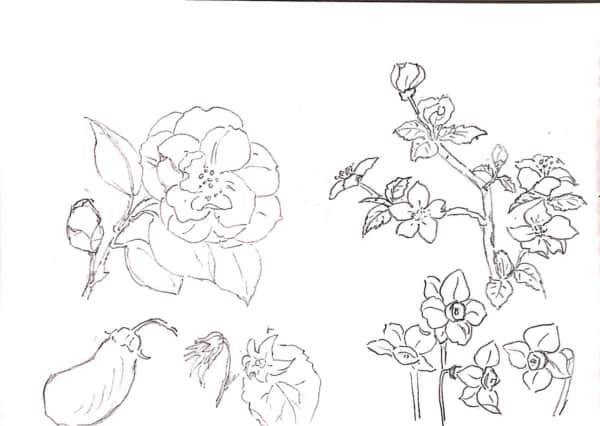 桜、バラ、水仙、桔梗、茄子のデッサン