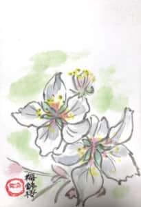 桜川のサクラ「梅鉢桜」