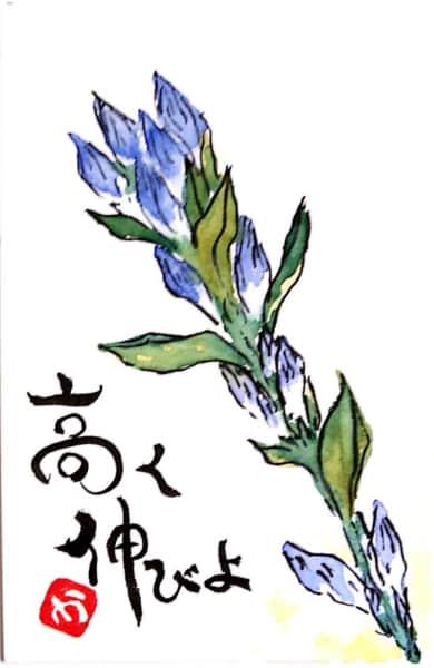 高く伸びよ 〜ブルーサルビアの花〜