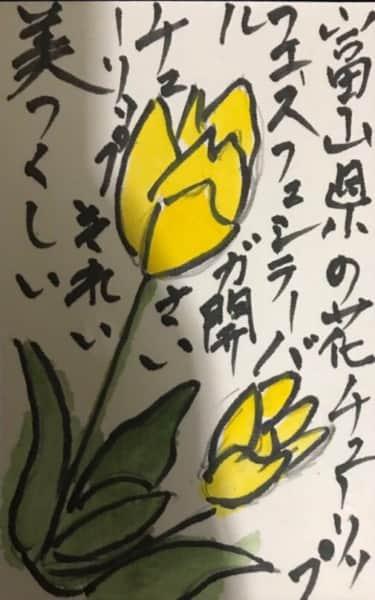 富山県の花チューリップフェステバル開催 チューリッブ綺麗、美しい