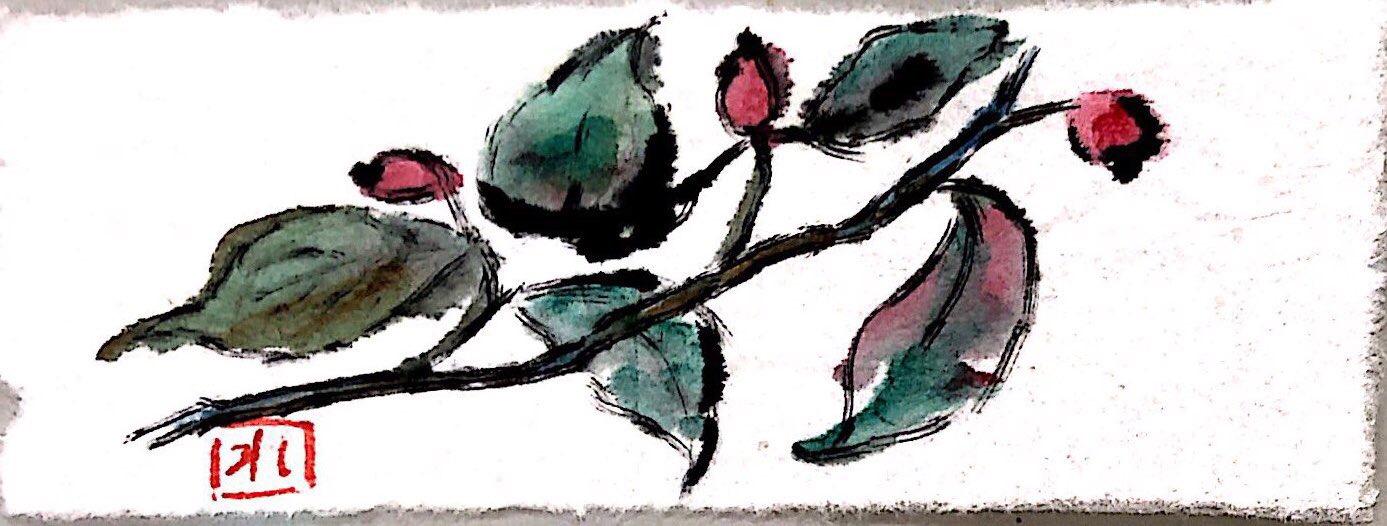 マユミの赤い実