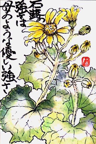 力強い石蕗の花