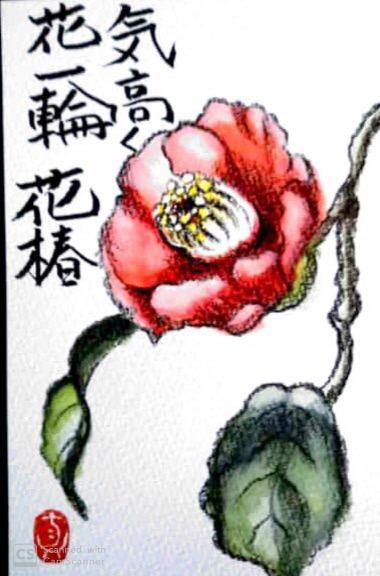 気高く咲く椿