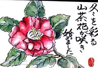 冬を彩る山茶花