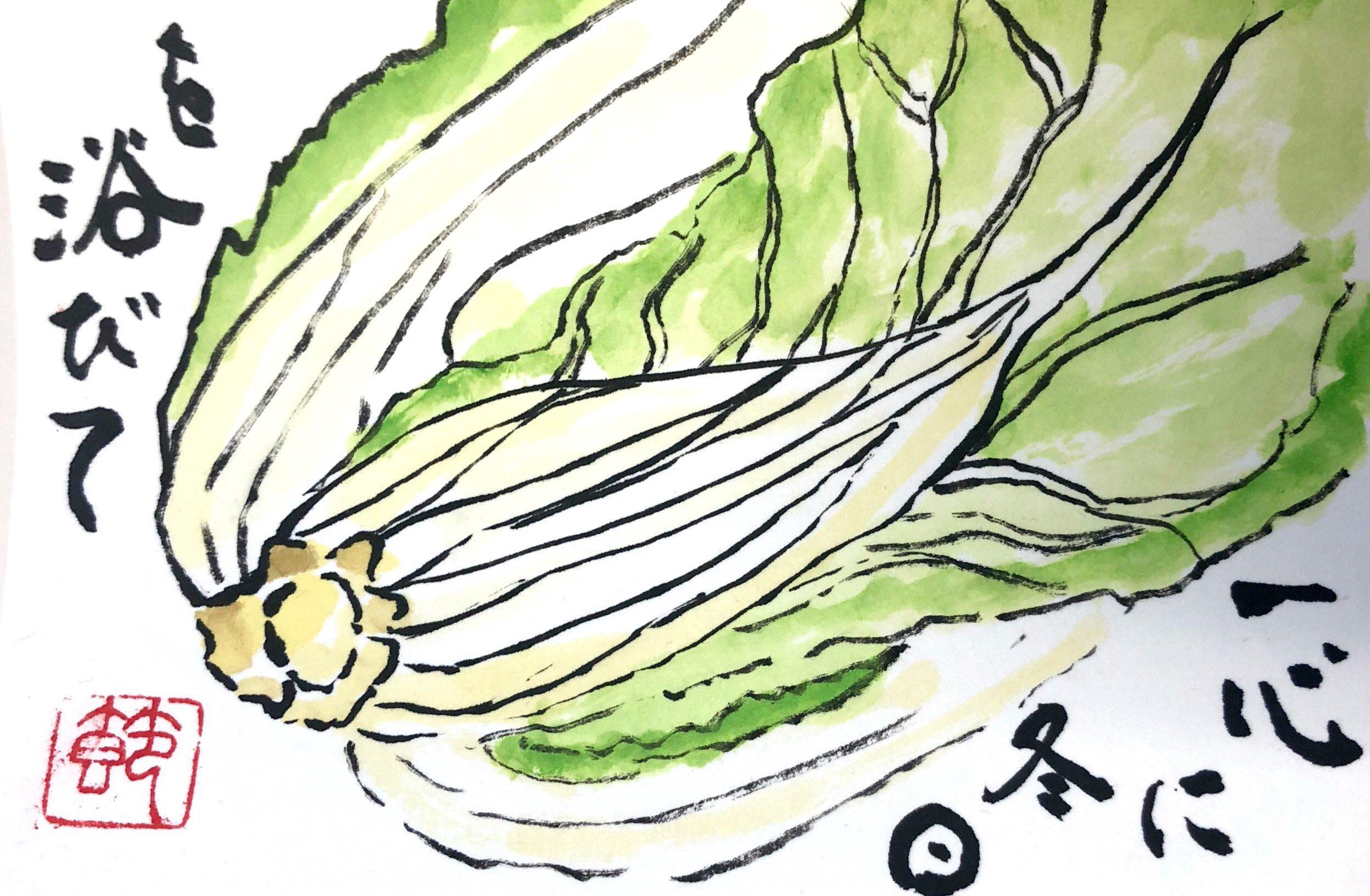 一心に冬日を浴びて 〜白菜の絵手紙〜