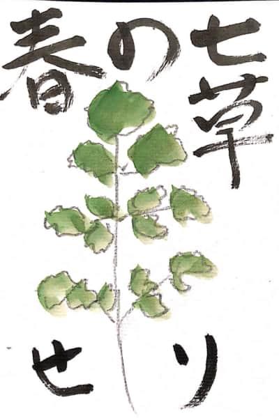 春の七草 セリの絵手紙