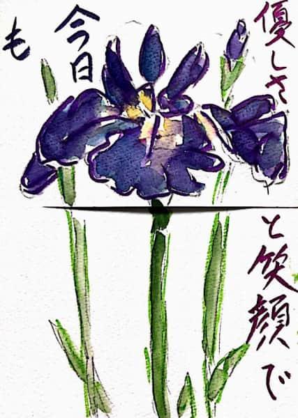 優しと笑顔で今日も 〜アヤメの花の絵手紙〜
