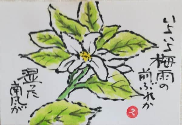 真っ白なミカンの花
