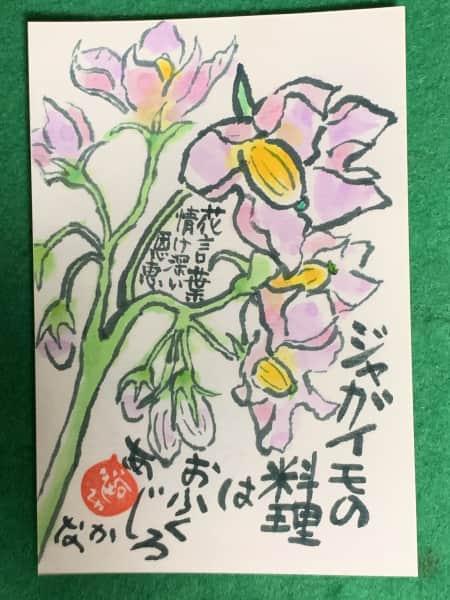 お袋の味 ジャガイモの花