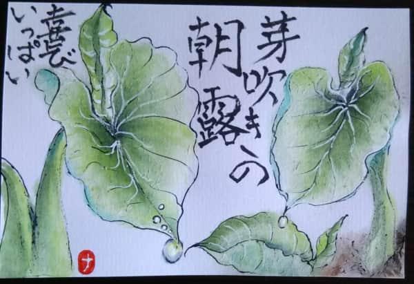 里芋の新芽