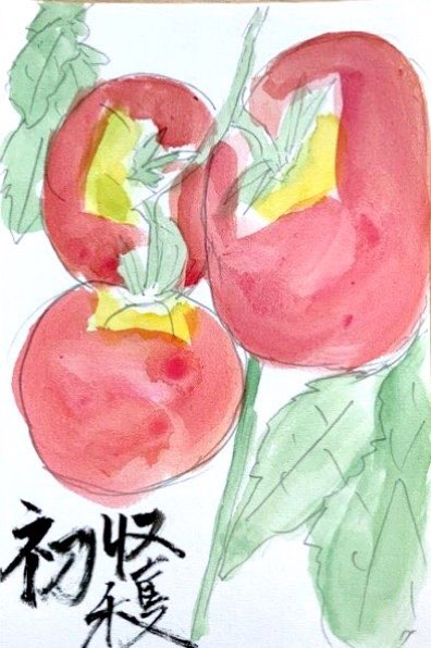 初収穫 トマトの絵手紙