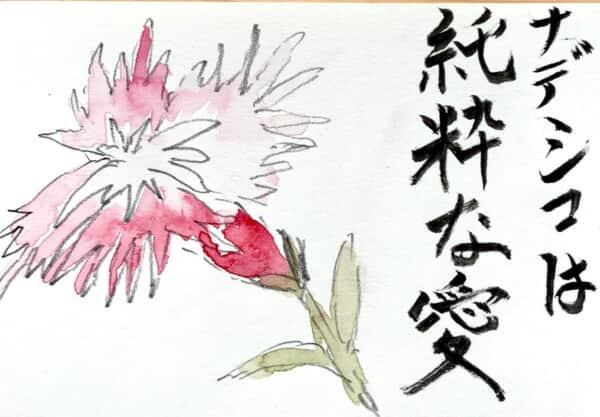 ナデシコは純粋な愛 〜ナデシコの花言葉の絵手紙〜