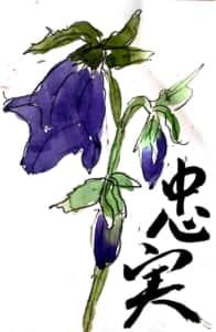 忠実 ホタルブクロの花言葉の絵手紙