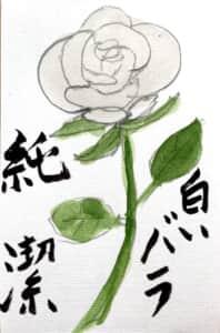 純潔 白いバラの花言葉の絵手紙