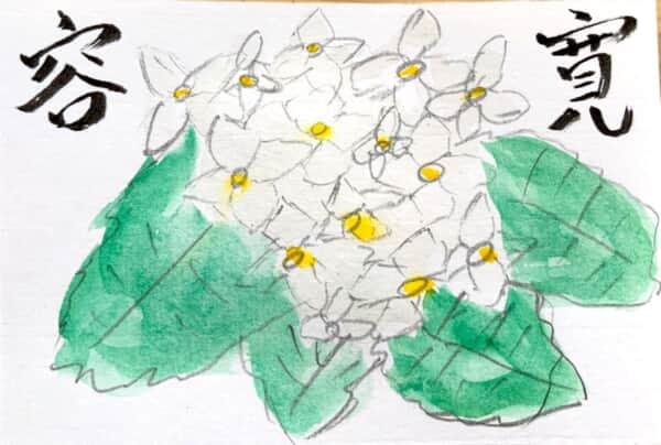 寛容 白いあじさいの花言葉の絵手紙