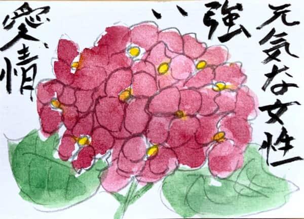 元気な女性 強い愛情 〜赤い紫陽花の花言葉絵手紙〜