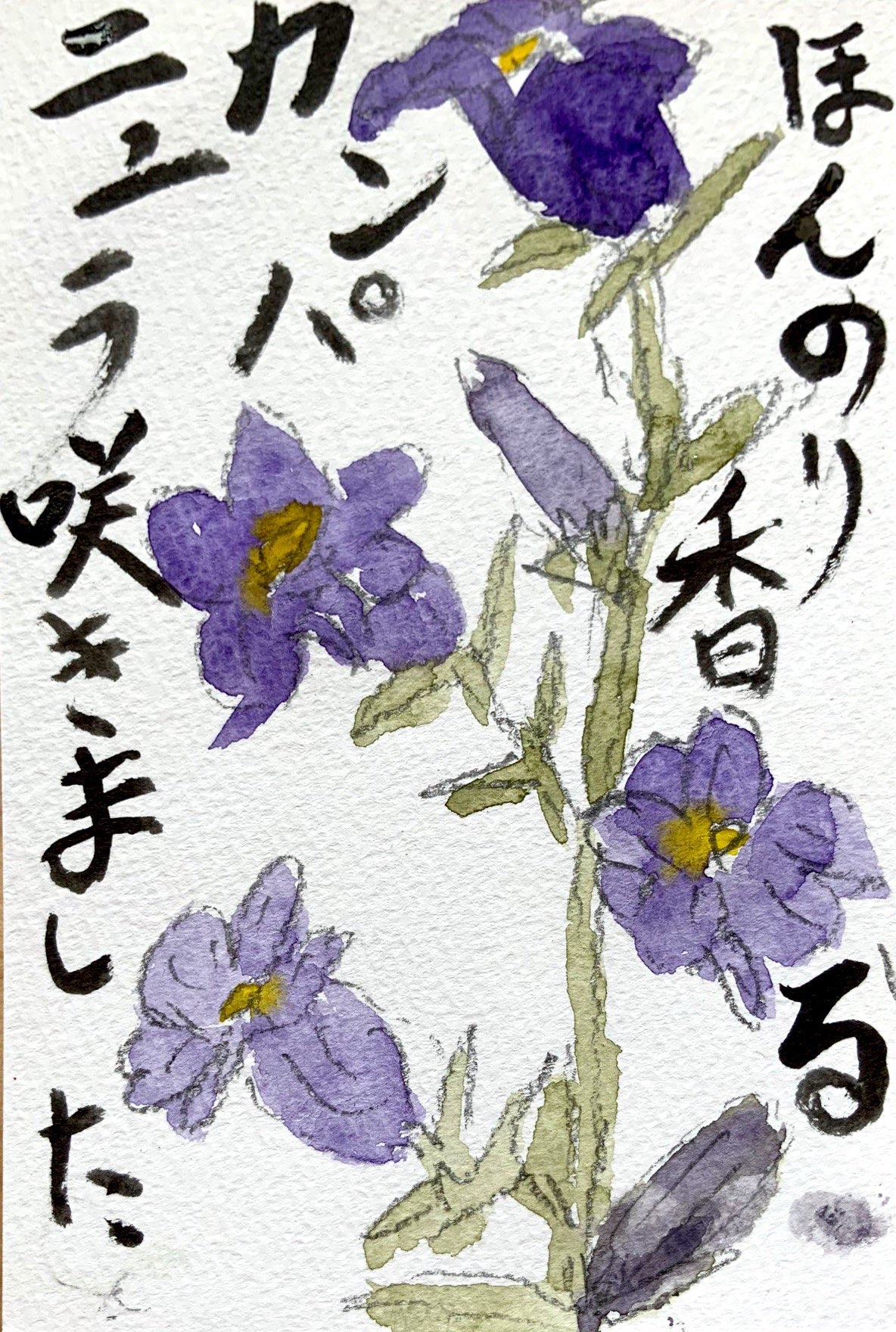 カンパニュラの花咲きました