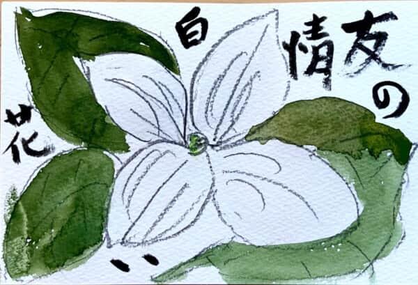 友情の白い花