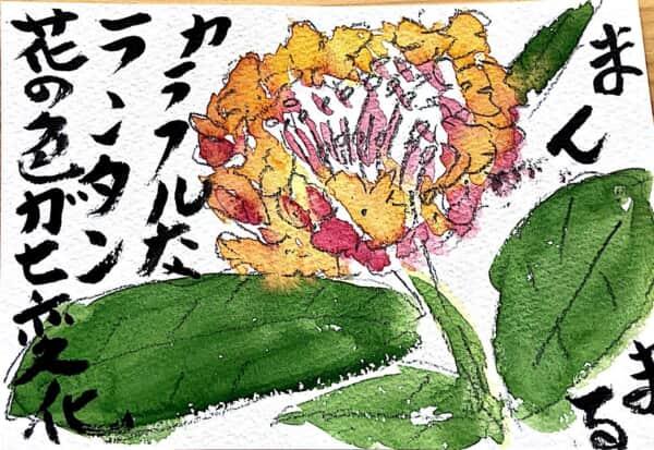 まんまる カラフルなランタン 花の色が七変化