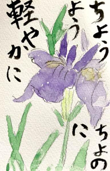 ちょうちょのように軽やかに 梅雨のアヤメの花の絵手紙