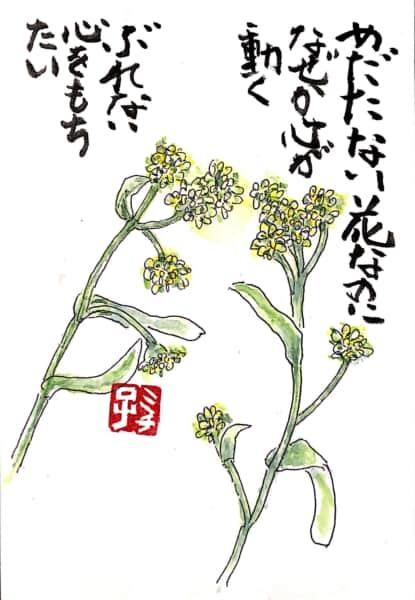 めだたない花なのに なぜか心が動く ぶれない心をもちたい 〜菜の花の絵手紙〜